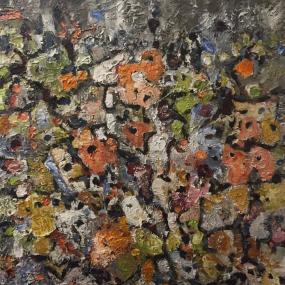 Surtsey-lichens: grásnuðra
