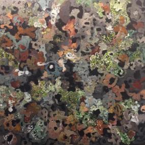 Surtsey-lichens in lawa