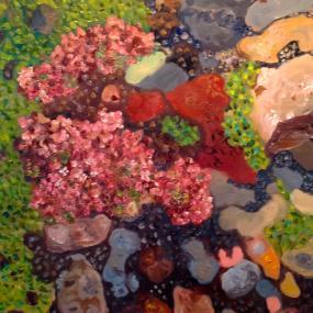 Surtsey - háplöntur, blóðberg - hight plants, thymus praecox sssp.articus