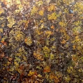 Surtsey fléttur - Strandmerla (caloplaca verruculifera)