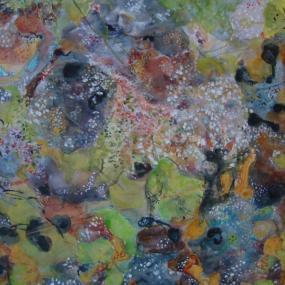 Surtsey Nature 2012 15
